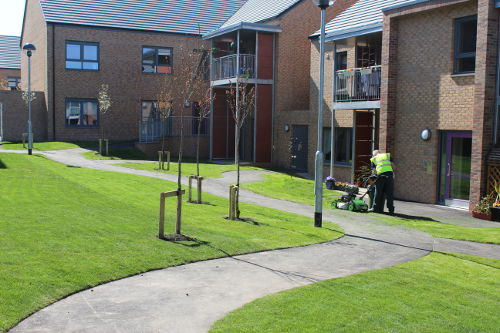 Commerical Landscaping Communal Areas