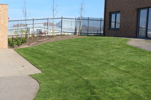 Commercial Landscaping Turf