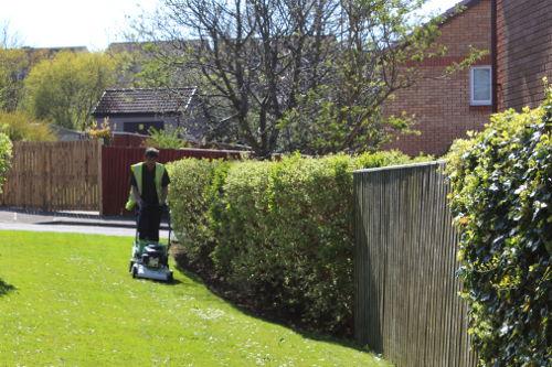 factor grass cutting
